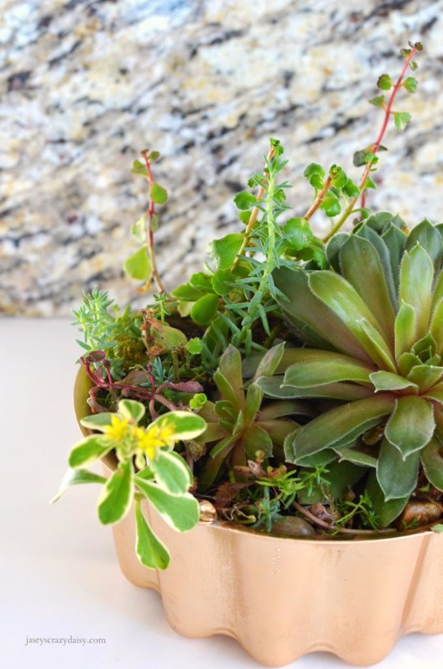 DIY Upcycled Succulent Planters